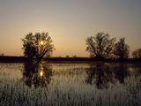 Willow Trees and Flooded Meadows in the Oder River Wetlands