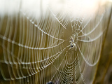 A Spider with a Fly in the Centre of its Web Covered in Dew at Dawn