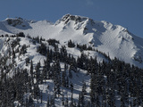 A View of Snow-Blanketed Whistler Peak Forested with Evergreen Trees