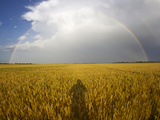 A Man&#39;s Shadow on a Wheat Field with a Rainbow Behind a Passing Storm