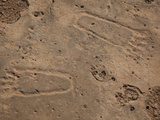 Ancient Footprints in the Sandstone on Socotra Island
