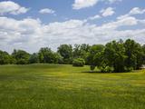 Spring Meadow in Druid Park