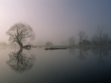 Foggy Landscape with Willow Tree in a Flooded Meadow on the Oder River