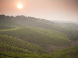 The Largest Plantation in the Area and the Top Producer of Puer Tea