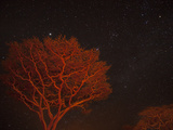 Campfire Lit Acacia Trees Against a Star Studded Sky