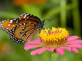A Butterfly Resting on a Flower