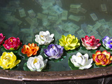 Flowers Floating in a Wishing Well