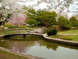 Japanese Garden with Cherry Trees  Pond and Footbridge in Springtime