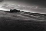 Cypresses and Rolling Hills