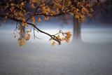 Fog Leaf