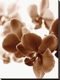 Dreamy Orchids II