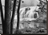 Bond Falls & Trees