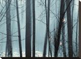 Spring Mist II
