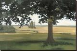 Hidden Pasture
