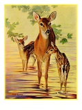 """Doe and Fawns ""April 29  1933"