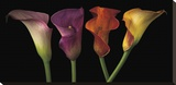 Jewel Calla Lilies