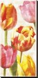 Glowing Tulips II