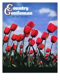 """""""Blooming Tulips """" Country Gentleman Cover  April 1  1941"""