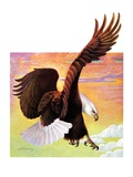 """Soaring Bald Eagle ""October 28  1933"