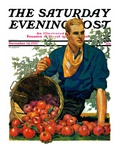 """Bushel of Apples "" Saturday Evening Post Cover  November 14  1931"