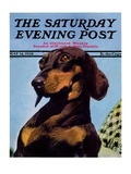 """Dachshund "" Saturday Evening Post Cover  May 14  1938"