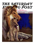 """Mother Collie and Pup "" Saturday Evening Post Cover  July 15  1933"