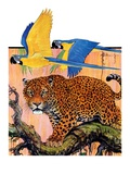 """Leopard and Parrots in Jungle ""September 2  1933"