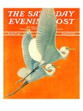 """Flying Storks "" Saturday Evening Post Cover  June 19  1937"