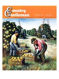"""""""Picking Grapefruit """" Country Gentleman Cover  February 1  1942"""
