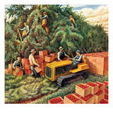 """Apple Pickers ""September 1  1942"