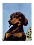 """Dachshund ""May 14  1938"