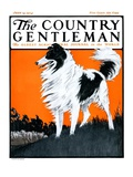 """Sheepdog Oversees Flock "" Country Gentleman Cover  June 14  1924"