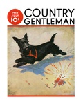 """Dog and Firecrackers "" Country Gentleman Cover  July 1  1936"