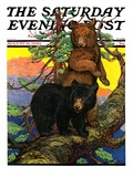"""Bears in Tree "" Saturday Evening Post Cover  August 16  1930"