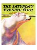 """Polar Bear "" Saturday Evening Post Cover  February 1  1936"