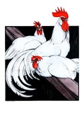 """Roosting Rooster and Hens ""December 8  1923"