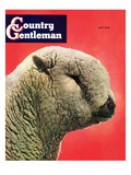 """Lamb "" Country Gentleman Cover  May 1  1948"