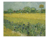 Field with Flowers Near Arles  1888