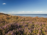 Braderuper Heath on the Island of Sylt
