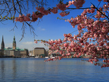 Hamburg Cityhall and Cherryblossoms