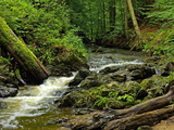 Small Forest Stream Landscape