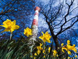 Spring at the Lighthouse