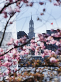 Springtime at Lake Alster and St Michaelis Church in Hamburg
