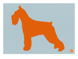 Standard Schnauzer Orange