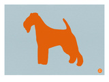 Fox Terrier Orange