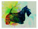 Scottish Terrier Watercolor