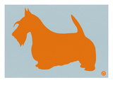 Scottish Terrier Orange
