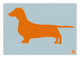 Dachshund Orange