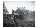 Spraying Fruit Trees  Yakima Valley  1915