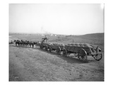 Horses Pulling Wheat Wagons  1915